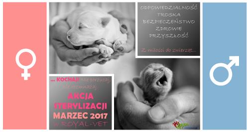 weterynarz Kraków sterylizacja